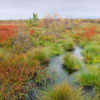 Flanders Moss Nature Reserve